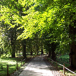 Footpath to King's College 150x150