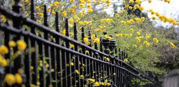 Car 2 railing flowers