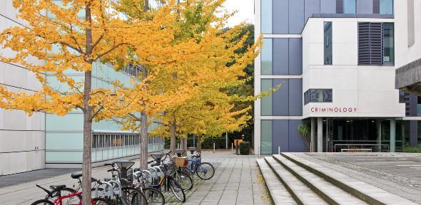Criminology Building trees bikes 590x288